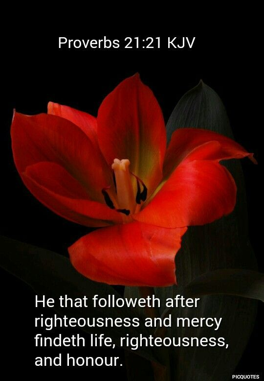 proverbs  21:21 kjv He that followeth after righteousness and mercy findeth life, righteousness, and honour.