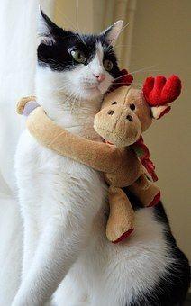 Cat, Kitten, Deer, Christmas, Ecard