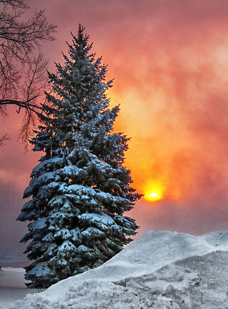 Circulation Dense In 2019 Ideas For Others Winter