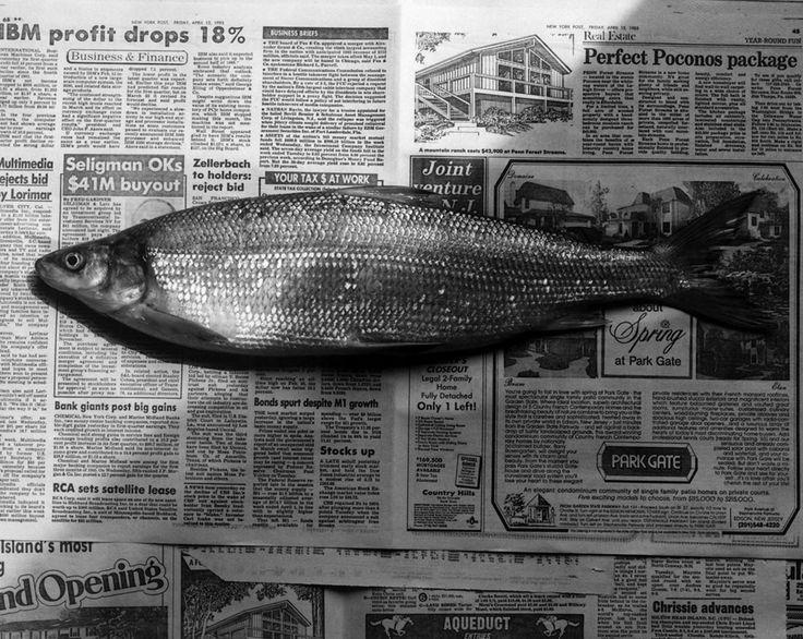 Robert Mapplethorpe;  Fish, 1985