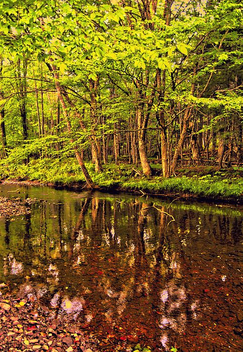 The Calmness  -  MacLellans Brook, Pictou County