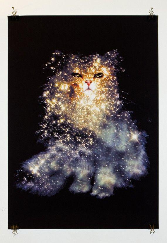 cat star print