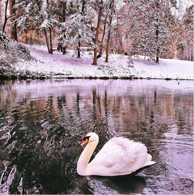 Swan Lake At Berry College