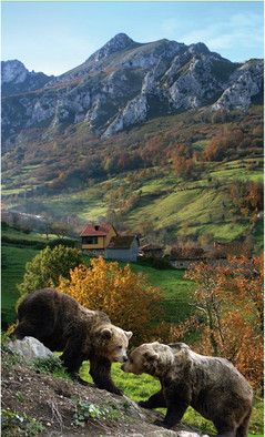 "Mountains of Proaza ""Bear Valleys"". Asturias. Spain. Juanjo Arrojo"