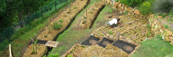 Organic Food Gardens @ Home - Installation, Maintenance &  On site coaching