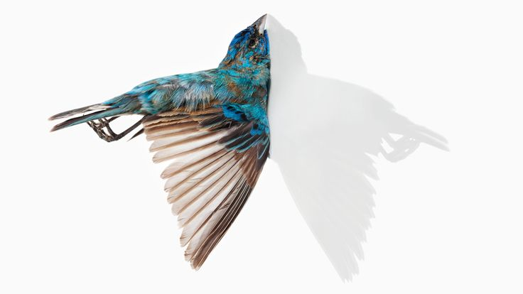 Bird vs. Building: Portraits of Flight Gone Wrong   Audubon