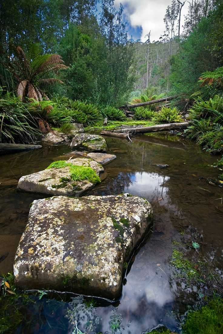 Sandspit River - Wielangta Forest, Tasmania.