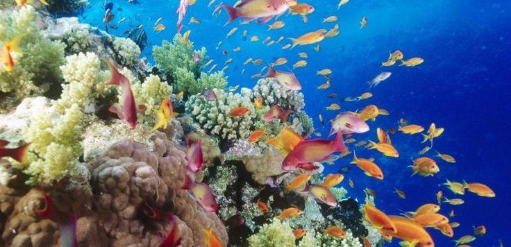 Científicos australianos pidieron hacer frente a todos los factores estresantes que afectan a la Gran Barrera de Coral, en el noreste de Australia, para que pueda recuperar su esplendor