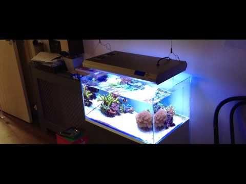 Less Is More: Declutter With Aquarium Minimalism   Okeanos Aquascaping    Simplistic Minimal Aquarium Designs