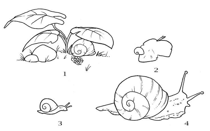 snail_life_cycle.gif (770×482)