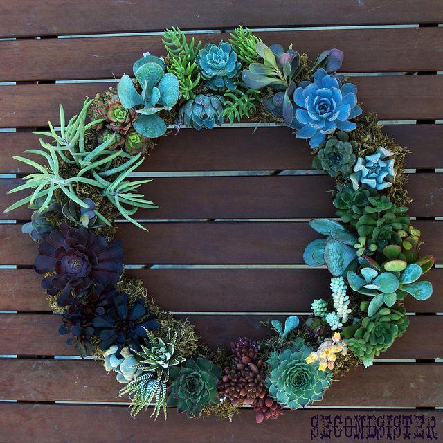 corona di succulente