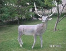 Big Moose statue
