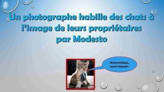 Diaporamas gratuits chez kamdou: PPS Un photographe habille des chats à l'image de ...