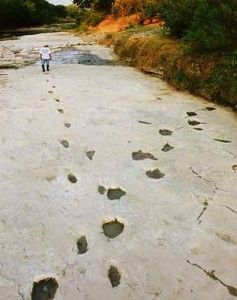 Human footprints crossing 3 toed dinosaur footprints fossilised in the Paluxy…