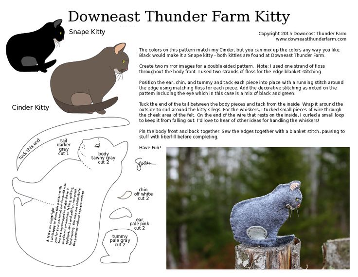 Downeast Thunder Farm | Our Little Patch of Woods in Downeast Maine