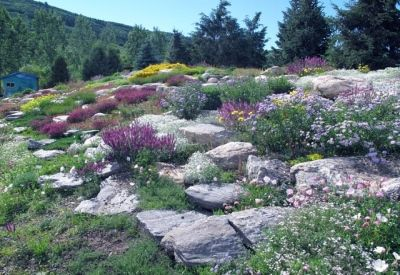17 Best Rock Gardens Images On Pinterest Landscaping Ideas Backyard Ideas And Garden Ideas