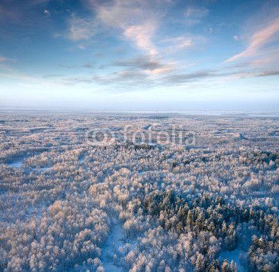 winter forest ©Vladimir Melnikov