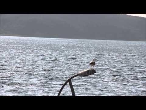 MARTI JONATHAN LIVINGSTON - RICHARD BACH 1.BÖLÜM - YouTube