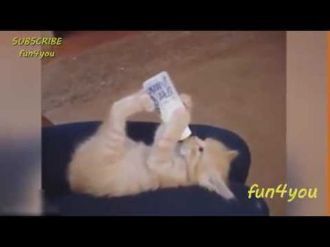 Katzen Videos zum Totlachen - Unglaublich, süße Tierchen - YouTube