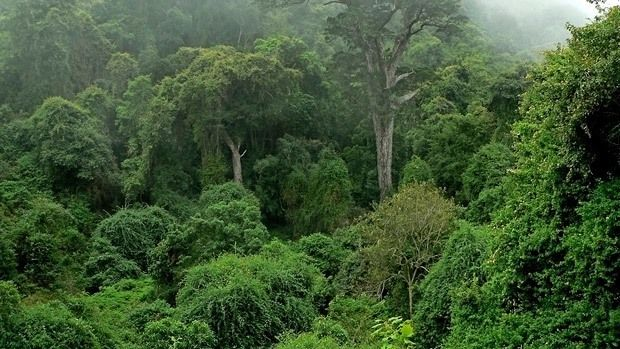 african jungle Congo   Challenges to Conserving the Congo Basin Rainforest: Climate Change ...
