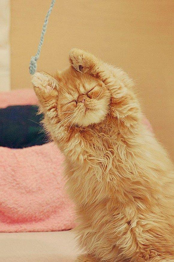 猫のきれいな画像を貼るよー(続き6):ハムスター速報 もっと見る