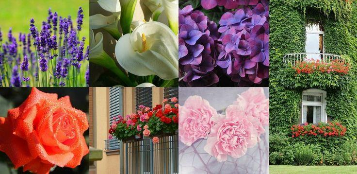 Las plantas m s resistentes para el exterior de casa plantas pinterest blog - Como cuidar las hortensias en maceta ...