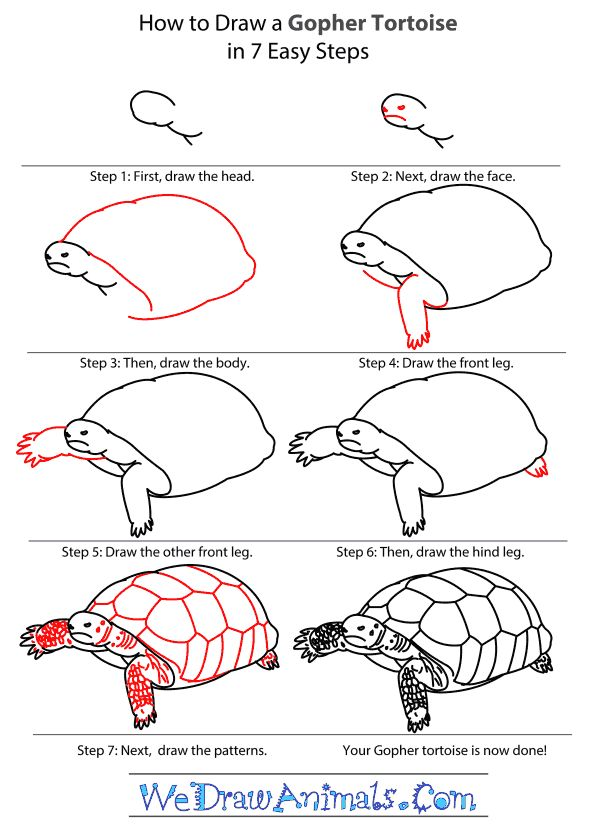 Easy Drawing Tutorials - Gopher Tortoise.