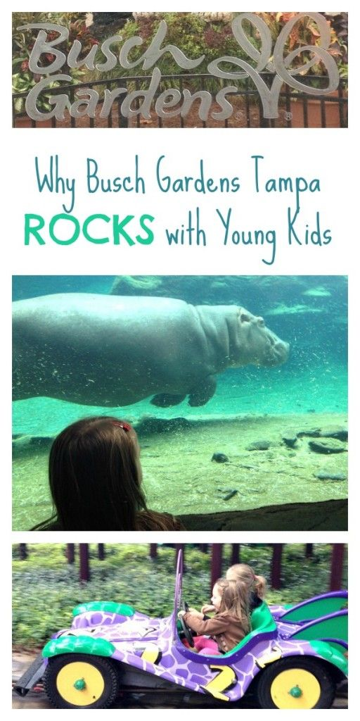 17 Best ideas about Busch Gardens Tampa Bay on Pinterest Busch