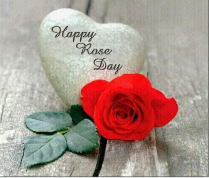 Appy Rose Day Meri jaan 🌷🌷🌷🌷🌷🌷🌷🌷🌷  Rose day