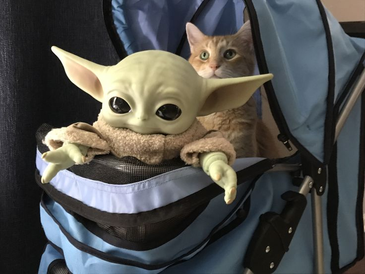 Baby Yoda going for a ride in the kitty stroller with