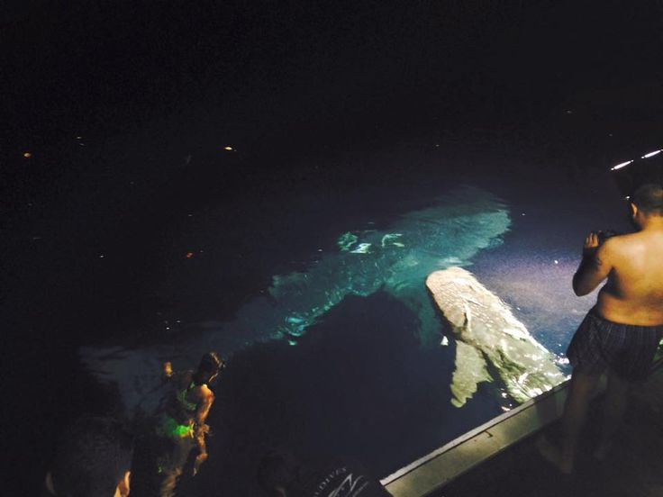 Live from the #MyDukeofYork #whaleshark #sweetawakening