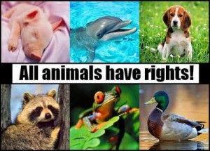 Τα δικαιώματα των Ζώων: Οικουμενική Διακήρυξη των Δικαιωμάτων των Ζώων