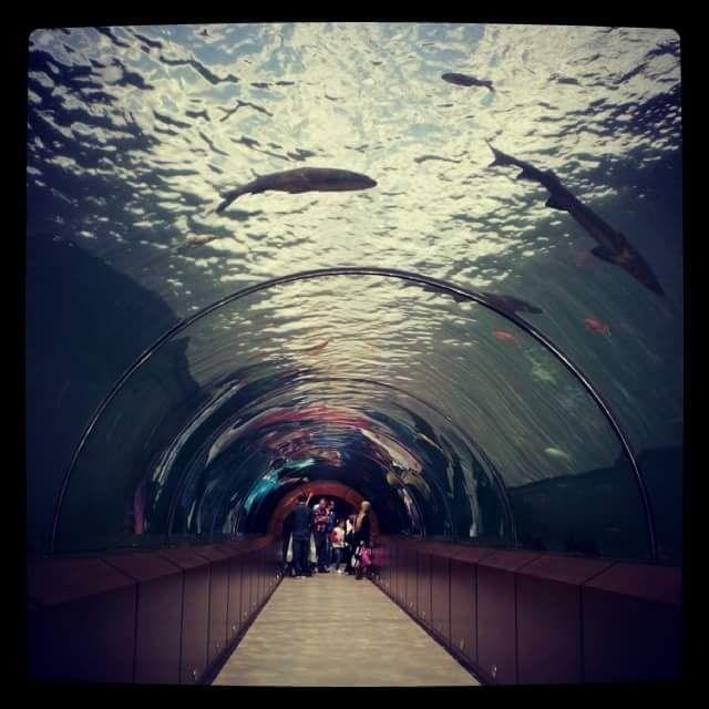 Photograph Tunnel Aquarium by burak karaca on 500px