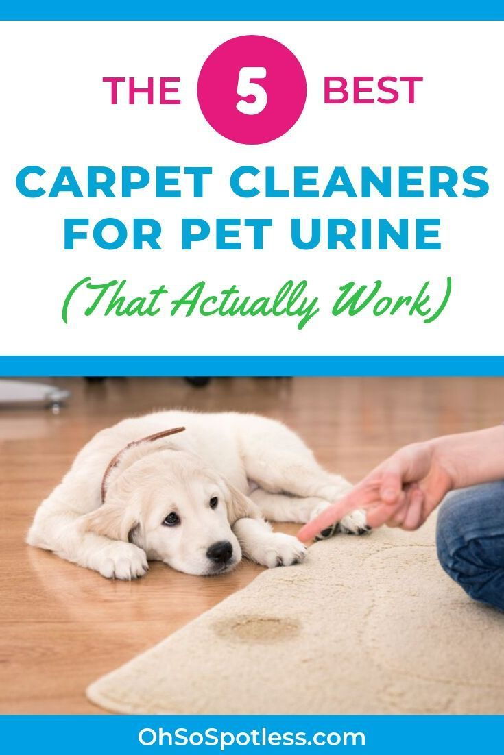 Pin On Carpet Care Tips And Tricks
