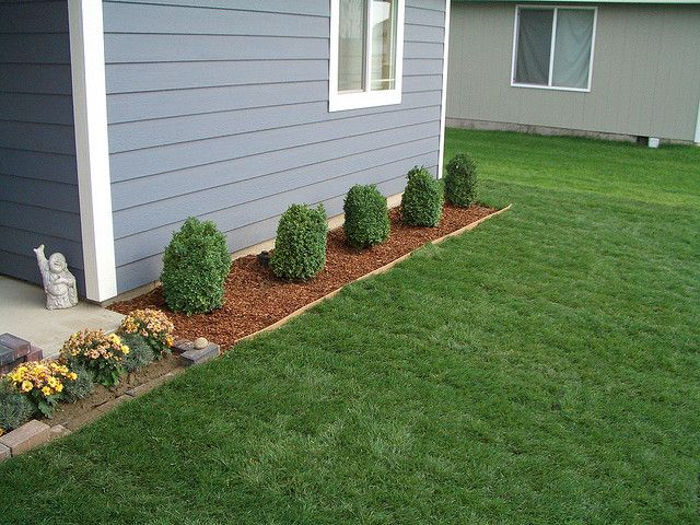 Boxwood Shrubs In Front Of House | Flickr   Photo Sharing!