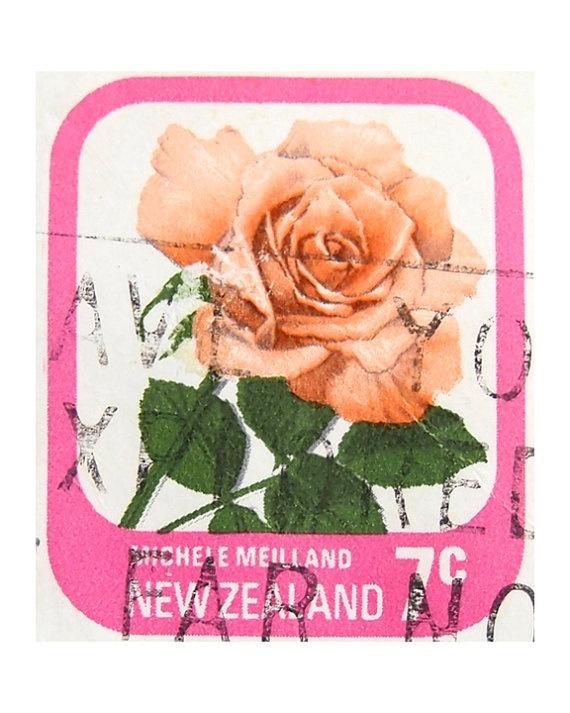 Rose stamp photograph - Retro - New Zealand - Art Print. $38.00, via Etsy.