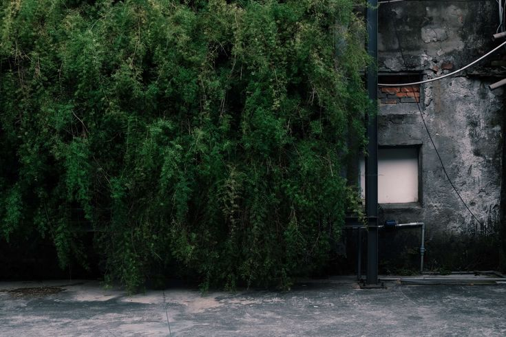 #brick #bricks #city #concrete #concrete surface #concrete wall #concreted #covered #dark green #downtown #green covered #grey concrete #plant #plantation #plants #still life #taipei #taiwan #urban #wall