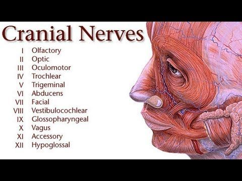 ▶ Medicine Lecture: Autonomic Nervous System and Cranial Nerves Documentary - YouTube