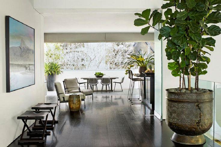 huge indoor tropical pot plant - Google Search