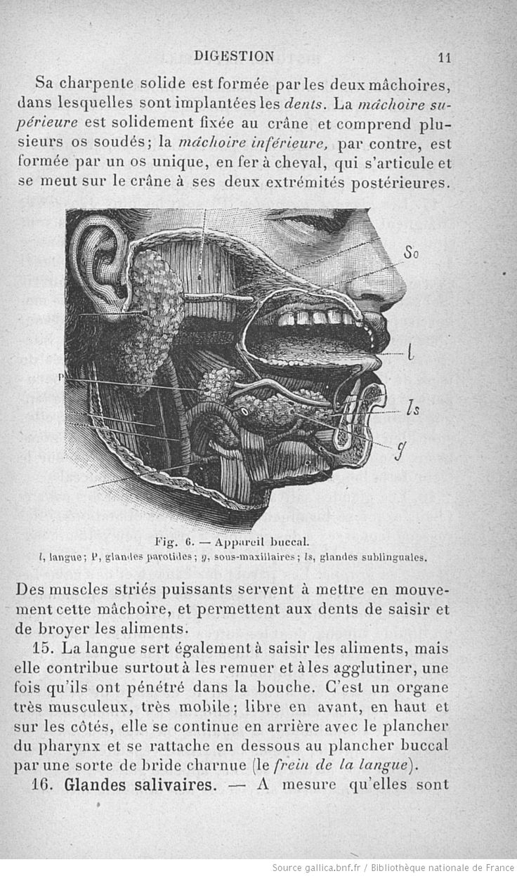 68 best Anatomie humaine images on Pinterest | Ark, Human anatomy ...