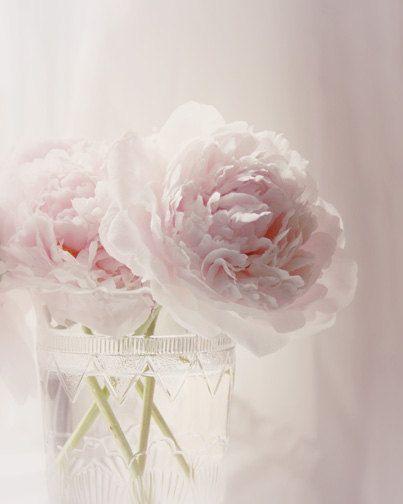 white Peonies vase | ... Flower Photograph - pink peony vase white light pastel home decor 8x10