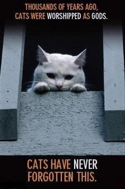 jajajaja!!!  man, i HATE cats!!!!