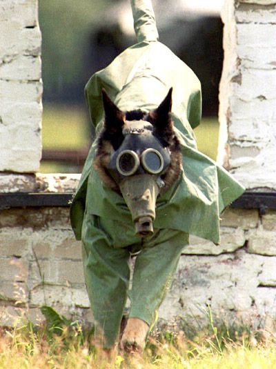 Love this pic of a military service dog in full combat gear.