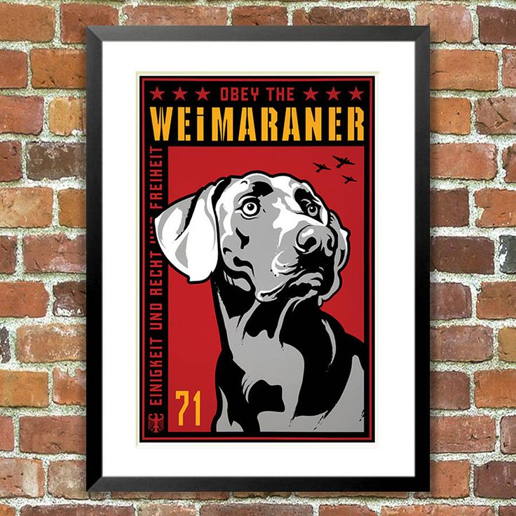 Weimaraner, Obey Dog Print, For Pet Lovers