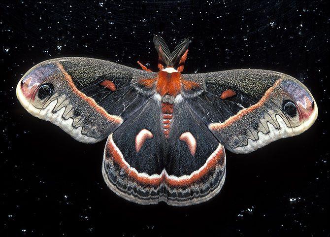 night sky moth