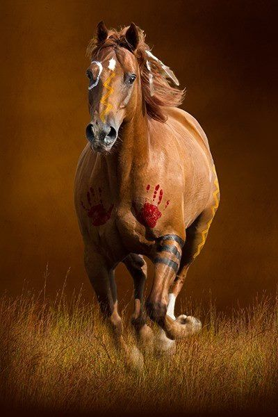Indian war horse,each painted part has a meaning.