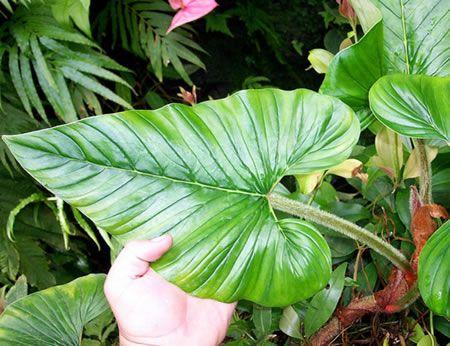 Astuces pour donner de la force a vos plantes verte Mélangez du marc de café avec du terreau. Récupérez l'eau de bouillon de cuisson des légumes. Versez dans les bacs de vos plantes vertesCette ea…