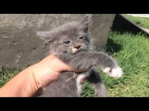 Look my kitten - YouTube