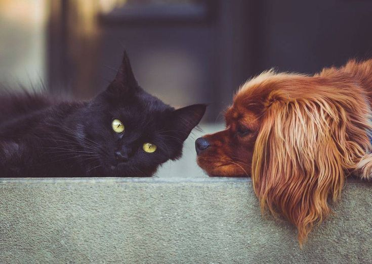 Welcome to the Amazing World of Animal Communication. Find out more about Susie Shiner, Bath's own Animal Communicator and how you can learn to talk to animals too by attending one of her Animal Communication Workshops and Courses.