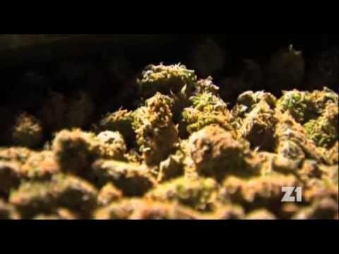 História marihuany.